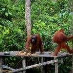 Borneo y su selva