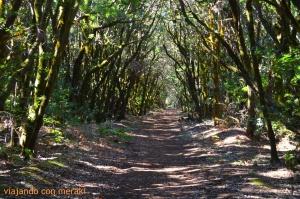 Bosques laurisilva