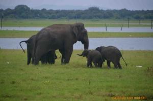 Safari en Kaudulla