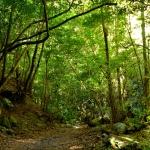 LA PALMA: La isla bonita y con razón