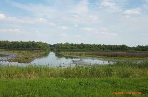 Parque Nacional de Biesbosch